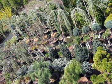 Plants_trees_ornamentas