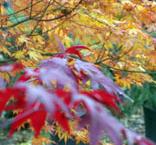 trees_dec_fall